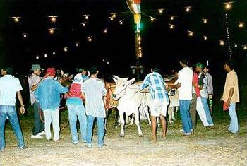 การแข่งขันวัวลาน